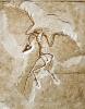 Fossil des Urvogels
