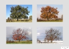 Silke Dankert - Meine vier Jahreszeiten